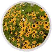 Black Eyed Susans-1 Round Beach Towel