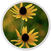 Black Eyed Susans 3276 H_2 Round Beach Towel