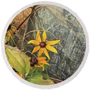 Black Eyed Susans Next Gray And Black Rock Fading Foliage Green 2 10222017 Colorado Round Beach Towel