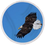 Black Feather Bald Eagle Round Beach Towel