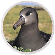 Black Footed Albatross Round Beach Towel