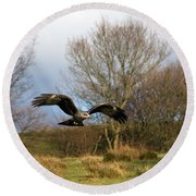 Black Kite Round Beach Towel