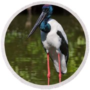 Black-necked Stork Round Beach Towel