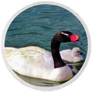 Black-necked Swan With Baby Round Beach Towel
