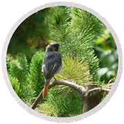 Black Redstart Round Beach Towel