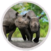 Black Rhinoceroses Round Beach Towel