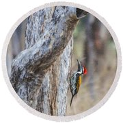 Black-rumped Flameback Aka Lesser Goldenback Round Beach Towel