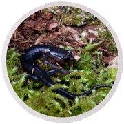 Black Salamander Round Beach Towel