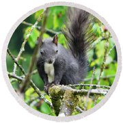 Black Squirrel In The Cherry Tree Round Beach Towel