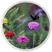Black Swallowtail Butterfly In August  Round Beach Towel