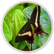 Black Swallowtail Butterfly In Iguazu Falls National Park-brazil  Round Beach Towel
