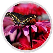Black Swallowtail Butterfly On Coneflower Square Round Beach Towel