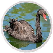 Black Swan Round Beach Towel