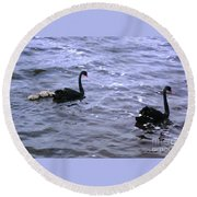 Black Swan Family Round Beach Towel