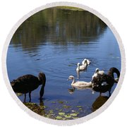 Black Swan's Round Beach Towel