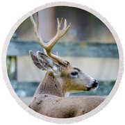 Black-tailed Buck Round Beach Towel
