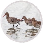 Black-tailed Godwits Round Beach Towel