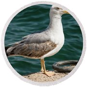 Black Tailed Gull On Dock Round Beach Towel