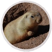 Black Tailed Prairie Dog Climbing Out Of A Hole Round Beach Towel