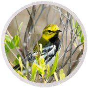 Black-throated Green Warbler Round Beach Towel