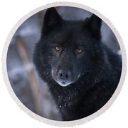 Black Wolf Portrait Round Beach Towel