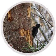 Black Woodpecker Peek Round Beach Towel
