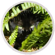 Blackie In The Ferns Round Beach Towel