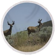 Blacktail Deer 3 Round Beach Towel