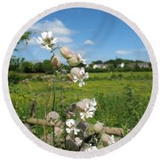 Bladder Campion On Stone Wall Round Beach Towel
