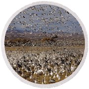 Blast Off Bosque Del Apache Round Beach Towel