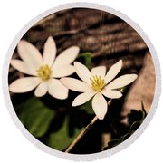 Bloodroot In Spring Round Beach Towel