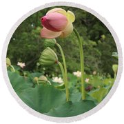 Bloom Among The Pods Round Beach Towel