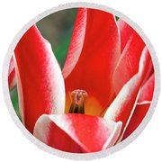 Bloom Of The Tulip Round Beach Towel