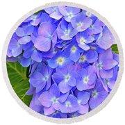 Blooming Blue Hydrangea Round Beach Towel