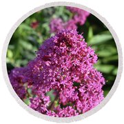 Blooming Brilliant Pink Phlox Flowers In A Garden Round Beach Towel