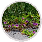 Blooming Cross Vines Along The Beach Round Beach Towel