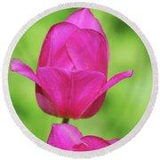 Blooming Dark Pink Tulip Flower Blossom In A Garden Round Beach Towel