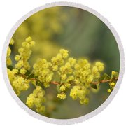 Blooming In Yellow Round Beach Towel