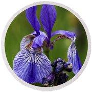 Blooming Purple Iris Round Beach Towel
