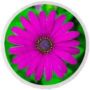 Blooming Purple Round Beach Towel