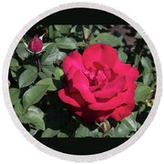 Blooming Rose With New Rose In Garden Round Beach Towel