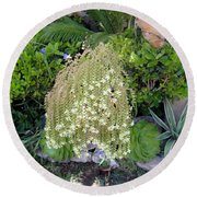 Blooming Succulent Plant. Amazing Round Beach Towel