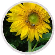 Blooming Sunflower Closeup Round Beach Towel
