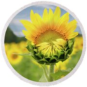 Blooming Sunflower Round Beach Towel