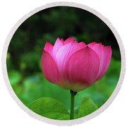 Blossoming Lotus Flower Closeuop Round Beach Towel