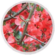 Blossoms Branches And Thorns Round Beach Towel