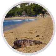 Blowfish Offshore  Round Beach Towel
