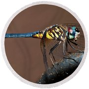 Blue And Gold Dragonfly Round Beach Towel