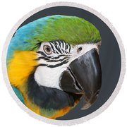 Blue And Gold Macaw Digital Freehand Painting Round Beach Towel