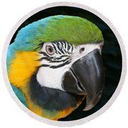 Blue And Gold Macaw Freehand Painting Square Format Round Beach Towel